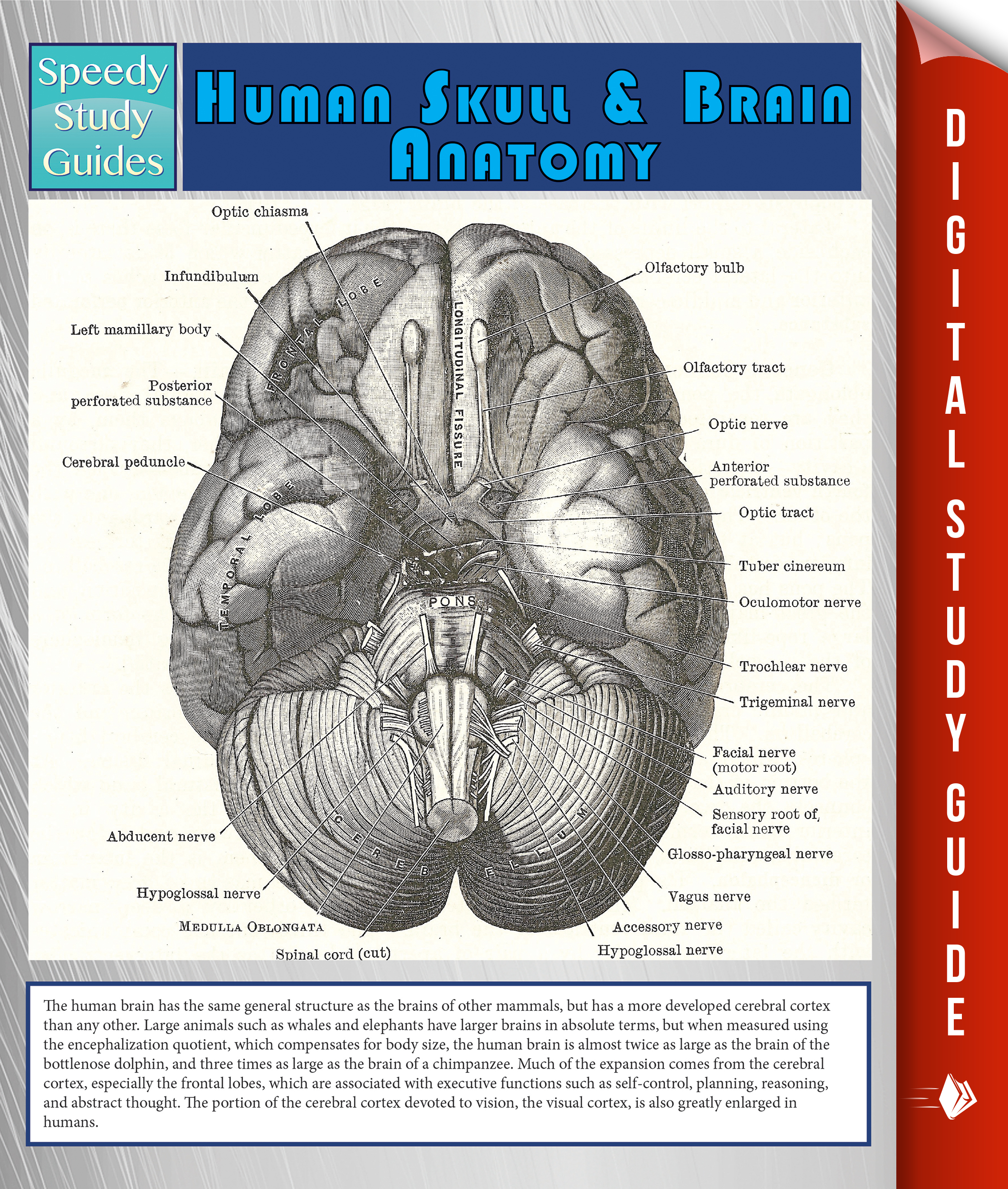 a study of the human brain
